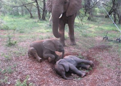 Animatronic Baby Elephant on Set