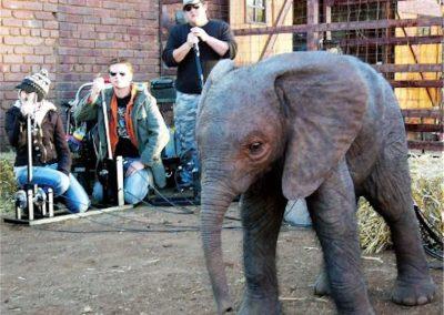 Animatronic Baby Elephant