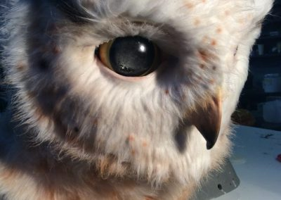 Fluffy Animatronic Owl White and Brown
