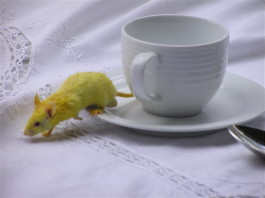 Yellow Mouse