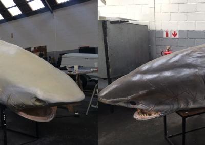 Bull Shark Animatronic Head