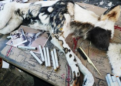 Wild Dog Being Painted